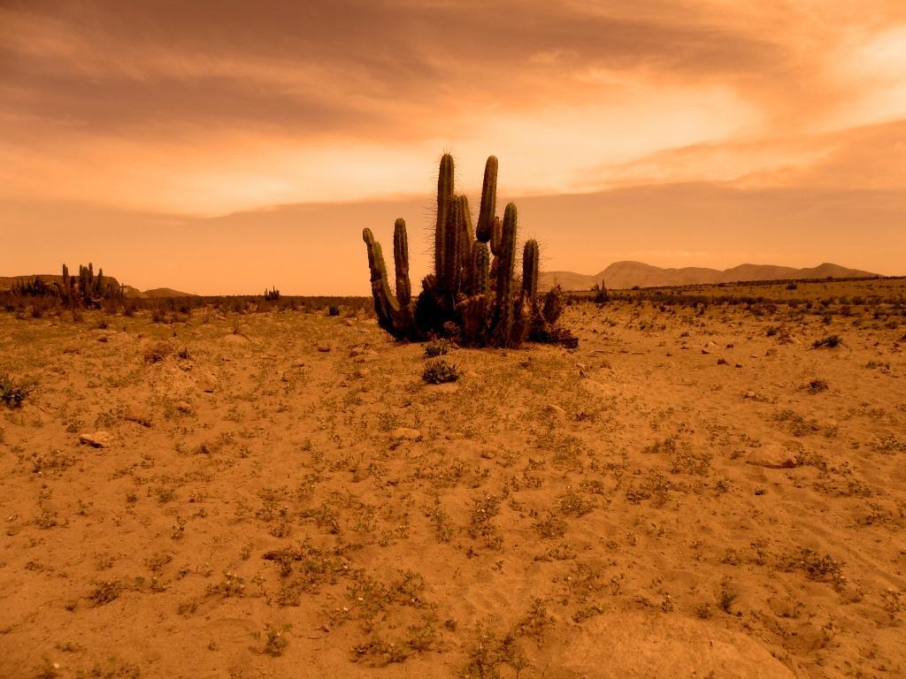 desierto clemesi- jaime